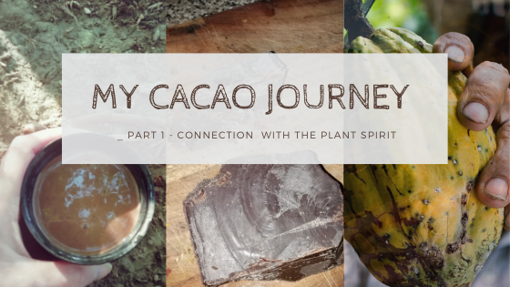 My Journey with Cacao – Part 1